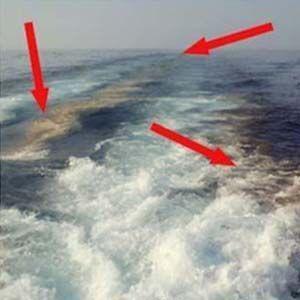 Aquatrails: contaminan nuestros mares y reducen el coeficiente intelectual