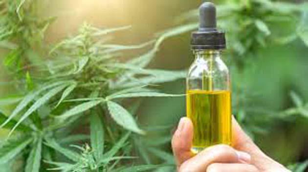 Cannabis: según estudios esta hierba cura el cáncer