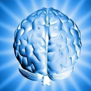 Científicos de Harvard estudian el origen de la conciencia