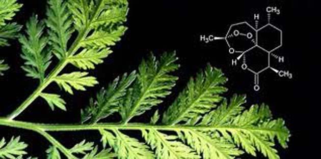 Artemisinina 0 es eficaz para todos los tipos de cáncer