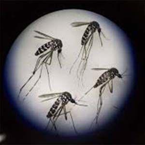 ADN: consecuencias alarmantes de la vacuna del Zika