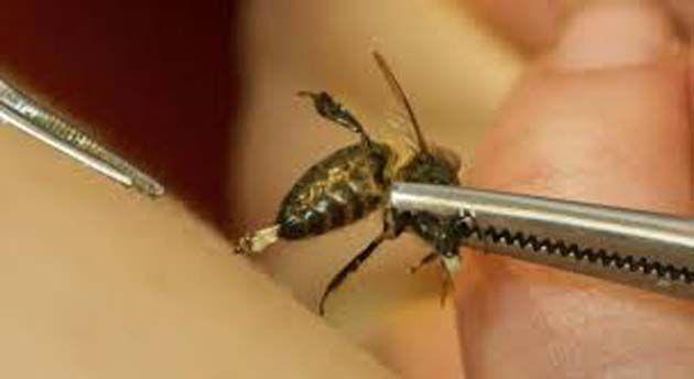 abejas4 - El veneno de abeja reduce las células tumorales en pacientes con cáncer