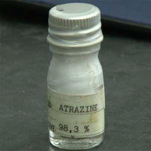 Peligro: la atrazina envenena las fuentes de agua potable