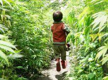 Aceite de cannabis, aceite de cañamo mexico, aceite cañamo, aceite esencial cannabis, comprar aceite de cañamo, venta de aceite de marihuana.