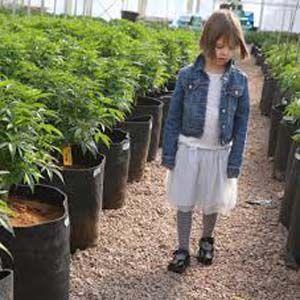 Beneficios del aceite de cannabis medicinal para los niños con autismo