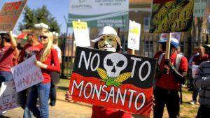 Hombres estériles: gracias a los venenos de las OMG 0