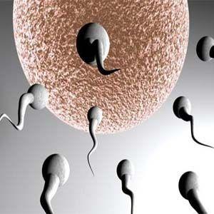 Las OMG con sus venenos, están haciendo a los hombres estériles.