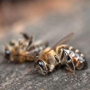 Se han encontrado neonicotinoides en la miel de abejas