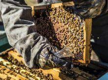 miel natural precio, miel por mayor.