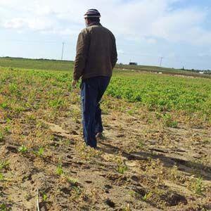 Israel no tiene derecho a rociar herbicidas en la Franja de Gaza