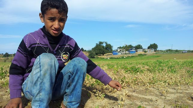 franja de gaza y cisjordania, xian gaza.