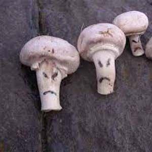 Las esporas de los hongos se adaptan casi perfectamente al viaje espacial