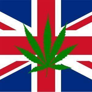 Buscan cambiar la ley que prohíbe el uso del cannabis medicinal