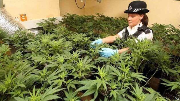 cannabis medical france.