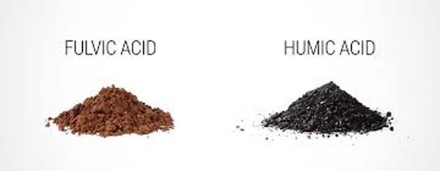 Ácido fúlvico y el ácido húmico, los 2 curan el cáncer