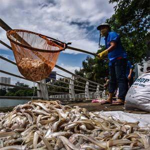 Ecosistemas: cada vez hay más muertes en masa de animales en todo el mundo