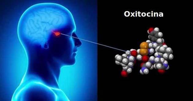 Oxitocina comprar: el experimento involucró a más de 100 participantes