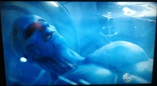 Contactos: pájaros azules de 1.80 m. raptaron mujeres y niños