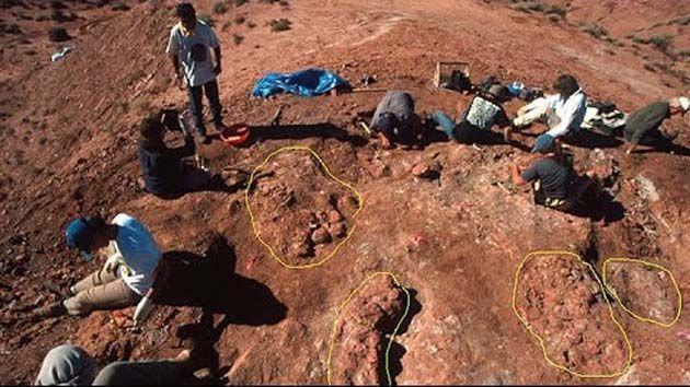 Patagonia tours: huevos de dinosaurio en la Patagonia Argentina
