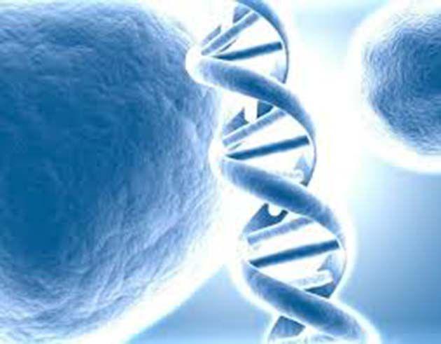 Memoria celular: fundamentos de la activación epigenética