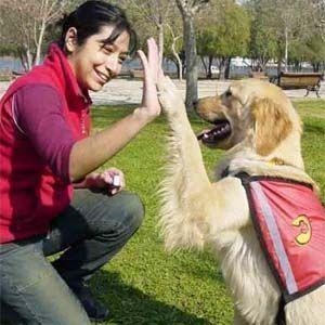 1300 experimentos centrados en órdenes telepáticas con perros