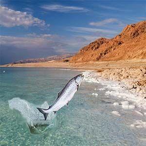 Biblia Cristiana: La Profecía prevé que el Mar Muerto florezca hacia la vida