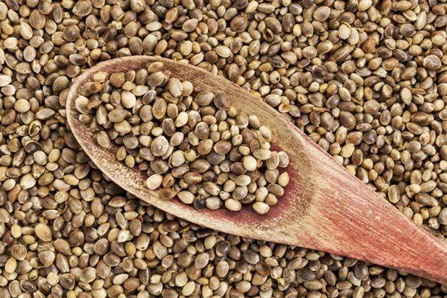 Semillas: las semillas de cáñamo tienen muchos beneficios para la salud