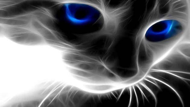 pienso para gatos pequeños.