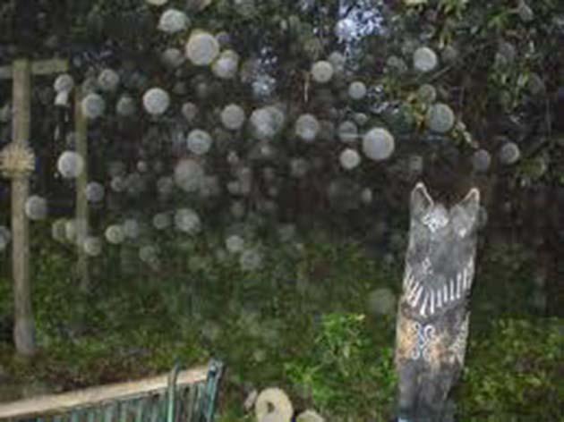 Esferas transparentes: 1 bolas de luz a través de la cámara