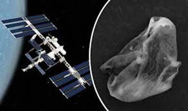 Satelite en vivo.: bacterias ingresaron accidentalmente del espacio exterior
