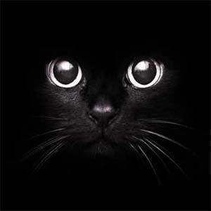 Los gatos: es uno de los animales más mágicos de la tierra