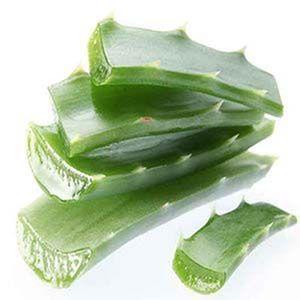Aloe vera gel: es famosa por sus beneficios sobre el cuerpo humano