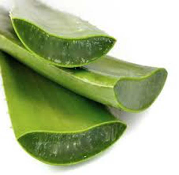 Aloe vera gel: esta planta tiene más de 200 minerales y vitaminas