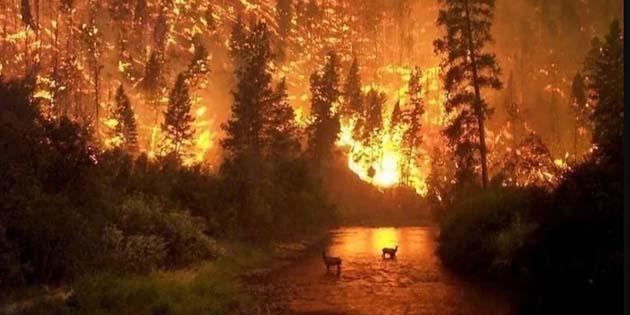 Vuelos a sao paulo: incendios en el Amazonas en este año: 72.843