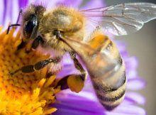 Colmena: más de 500 millones de abejas murieron en Brasil en 3 meses