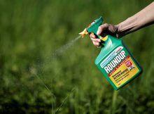 Google web: Monsanto espiaba y desacreditaba a periodistas y activistas