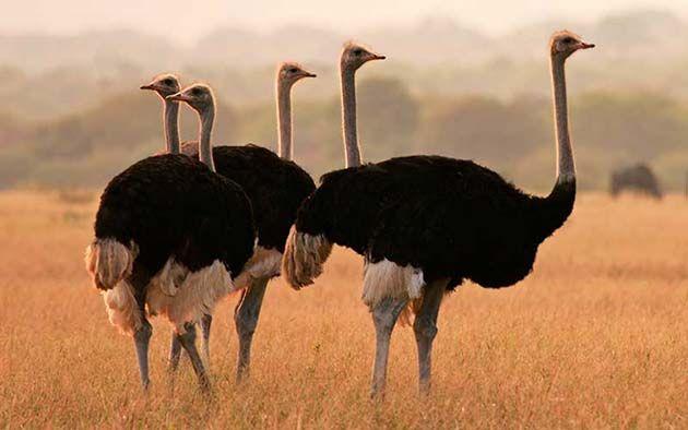 Aves: caca de pájaro, el ácido úrico es la respuesta
