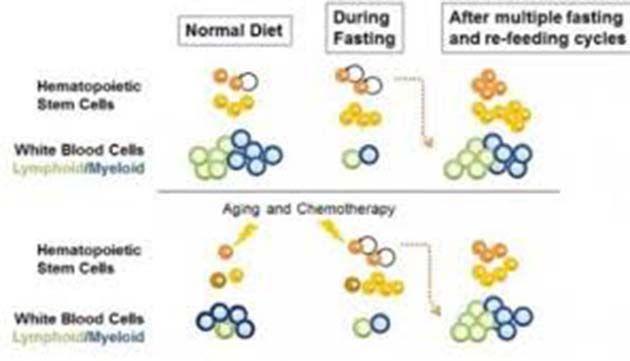Dieta del ayuno: 72 horas regenera el sistema inmunitario