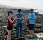 Curazao playas: encontraron nueva especie de choanoflagelado