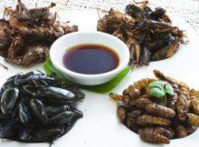 Insectos: 1 Zuckerberg promovió en Twiter comer insectos, con resultados negativos
