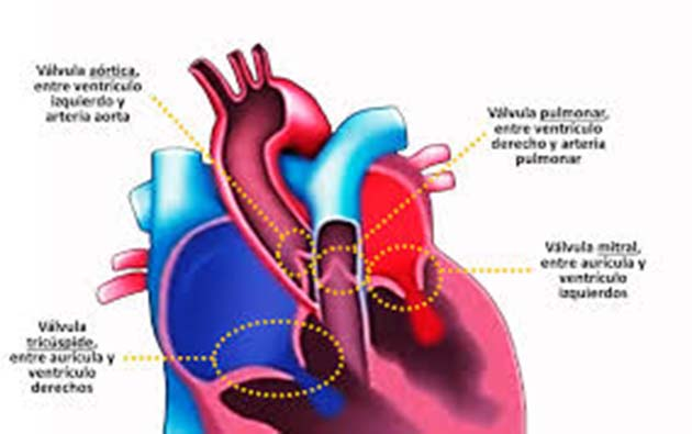 Válvula aórtica: AINE del grupo llamado inhibidores de la COX-2