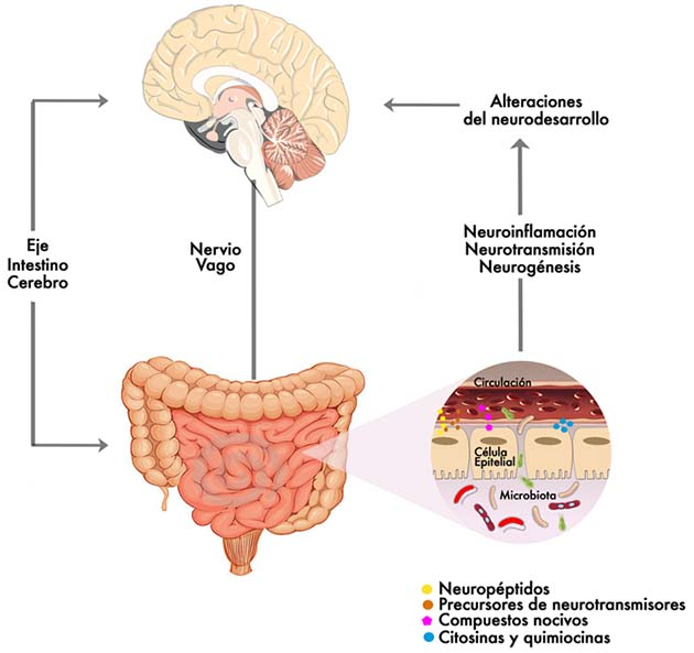 Autismo: el 90% de las personas con autismo sufren problemas intestinales