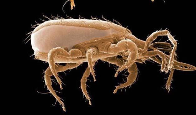 Acaros: 1 los ácaros y las garrapatas están relacionadas