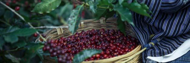 Café: 1 beber café reduce el riesgo de desarrollar Parkinson