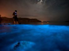 Floracion: 1 las lágrimas azules pueden envenenar la vida marina