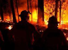 Incendio Forestal: La policía de 5 estados investiga