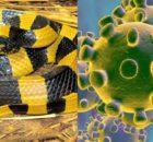 Serpiente: analizaron la secuencia del virus, 2019-nCoV