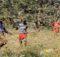 Plaga: en Kenia es la peor plaga de langostas en 70 años