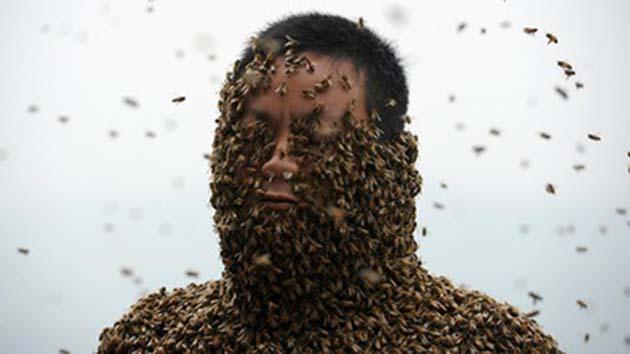 Miel de abeja: producen 500.000 toneladas de miel anualmente