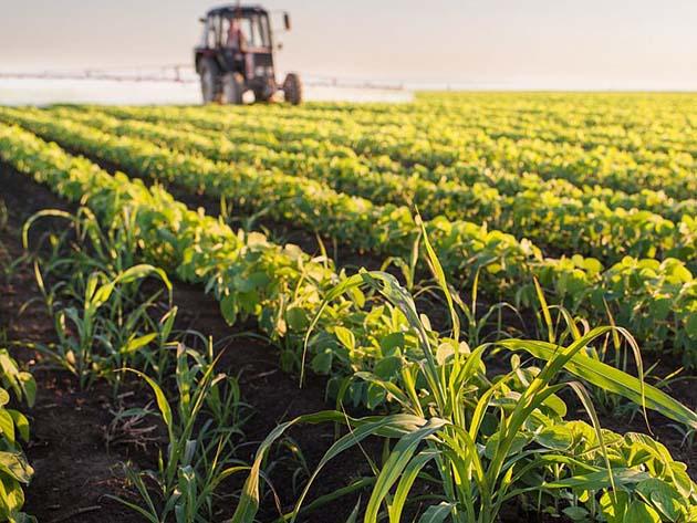 Pesticidas: 3.5 % de los niños tienen presión arterial alta